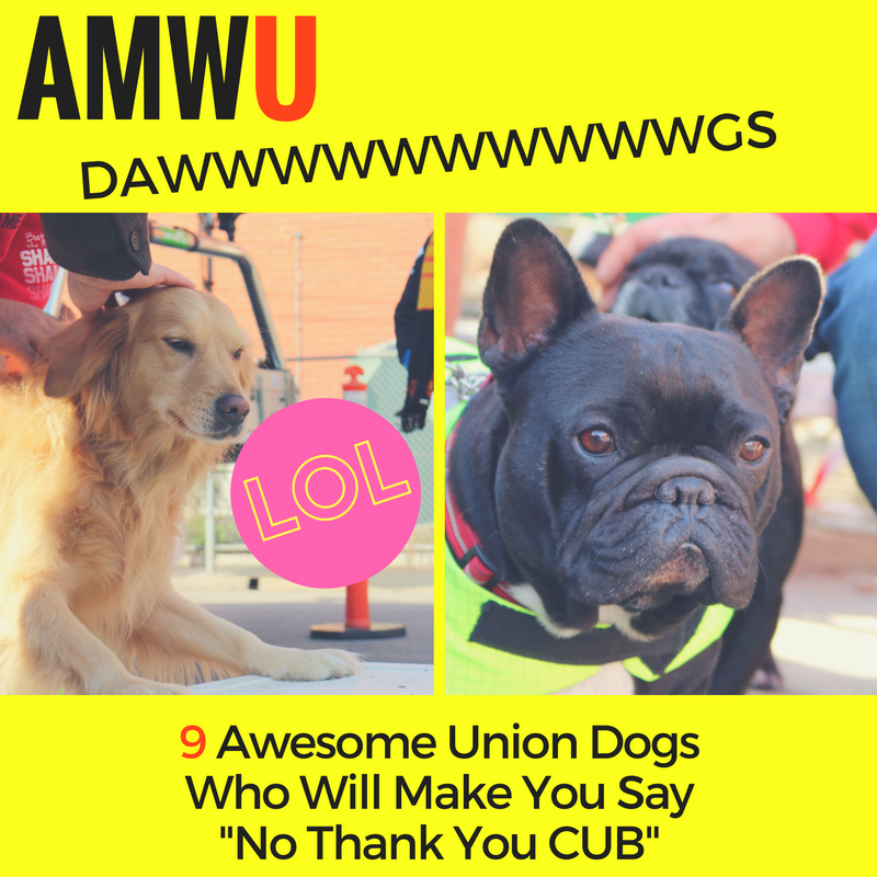 Doggie day on the CUB picket line