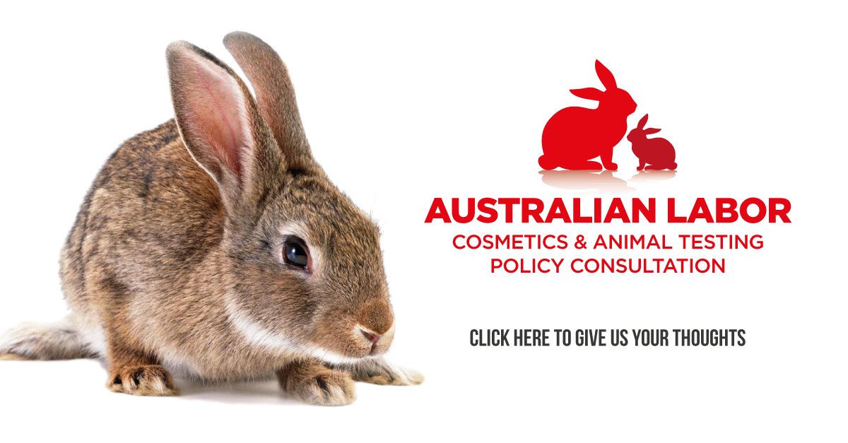 animal testing in cosmetic industry and Animal testing for cosmetics is a hot topic in the beauty industry, with most consumers and many companies deciding to avoid products made with animal testing.