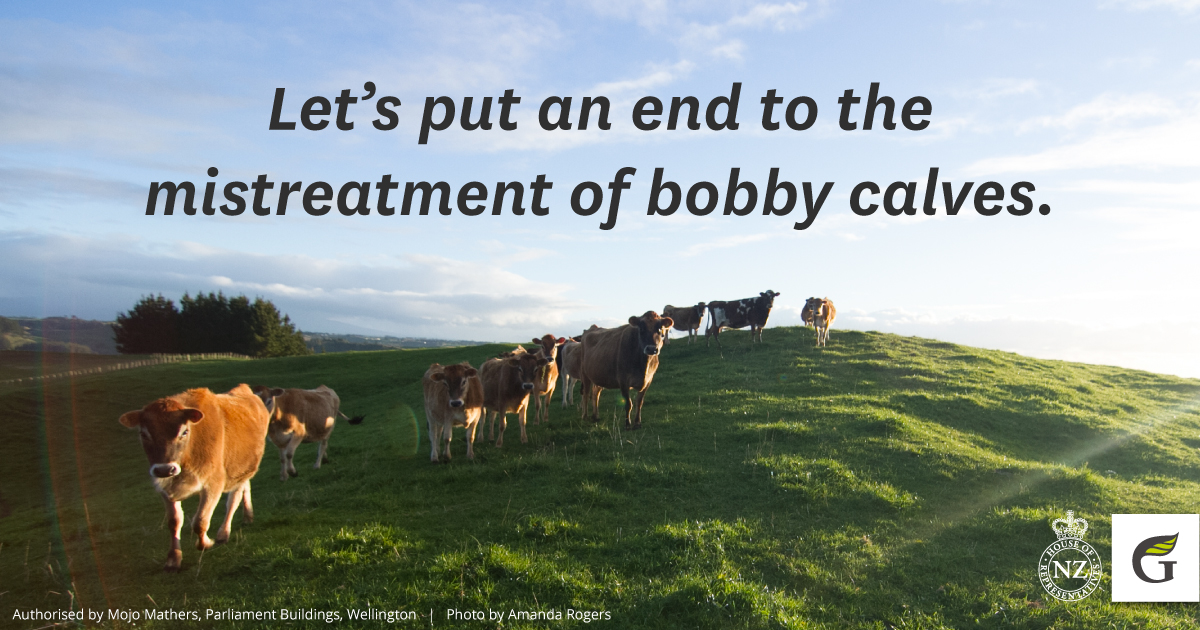 Animal Welfare - Bobby calves