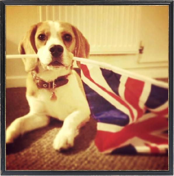 4-13-newsletter-UK-beagle.jpg