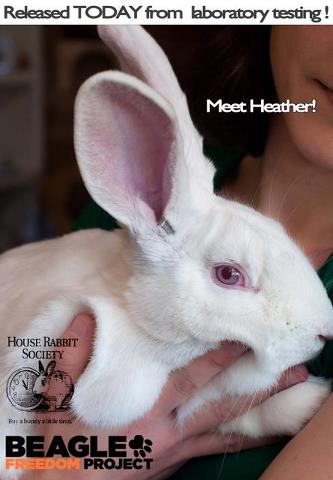 heather_BFP_rabbit.jpg