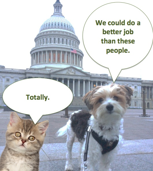 Cat_and_Dog_on_Congress.jpg