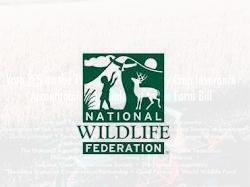 National Wildlife Federation - Ad