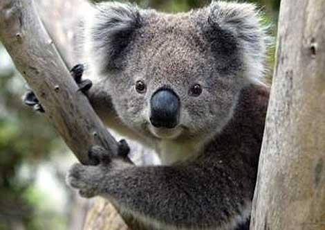 Great Koala National Park - Dawn Walker MP