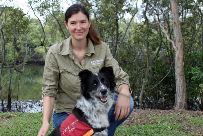 Greens call for koala sniffer dogs to be used in pre-logging surveys in NSW's State Forests - Dawn Walker MP