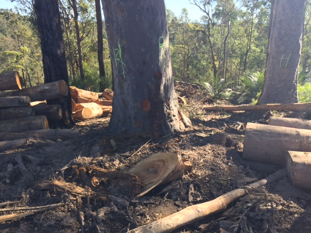 Greens call for urgent suspension of planned logging operations in Mogo State Forest - Dawn Walker MP