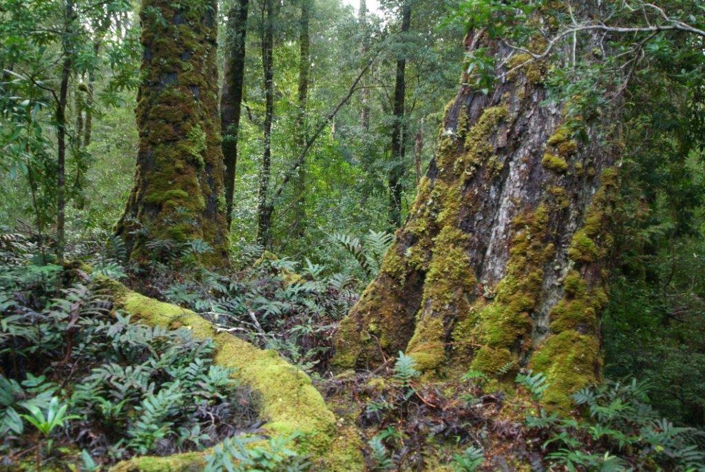 Australia 39 s world heritage areas under threat edo nsw for Australian rainforest