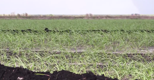 WINK NEWS: Everglades Agricultural Area reservoir project helping prevent future water crisis