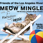 Meow Mingle Kitten Adoption
