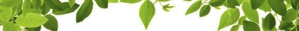 LeafDecor.jpg