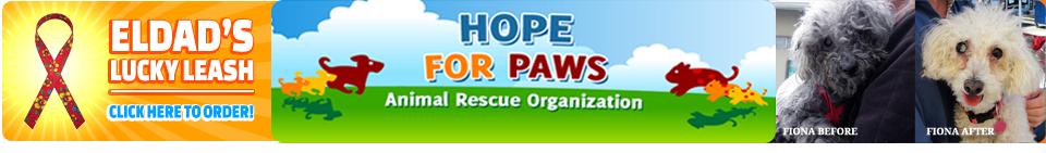 Rescates de perros callejeros