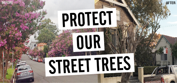 Protect Our Street Trees - Jamie Parker MP