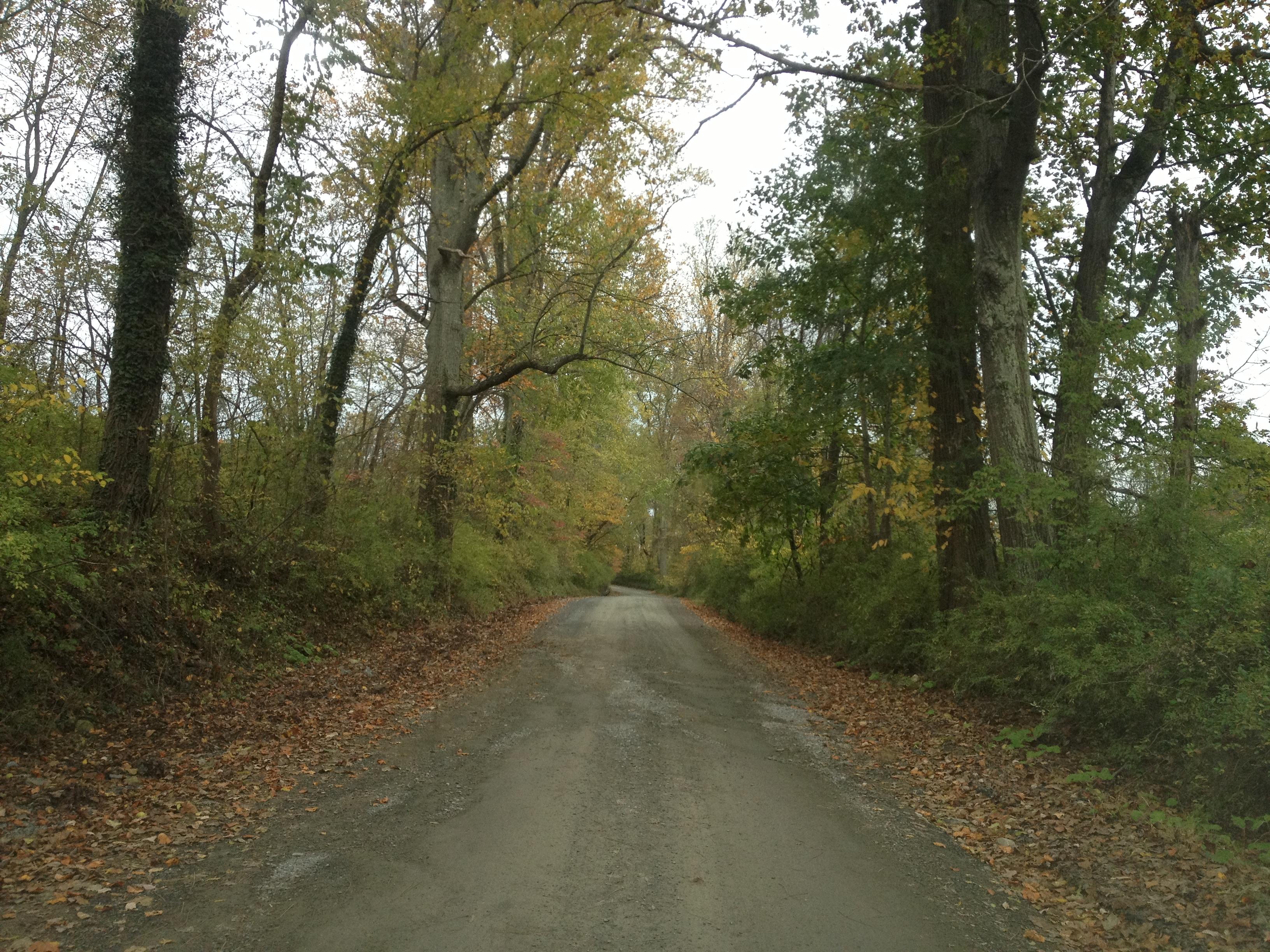 Rural_Roads.jpg