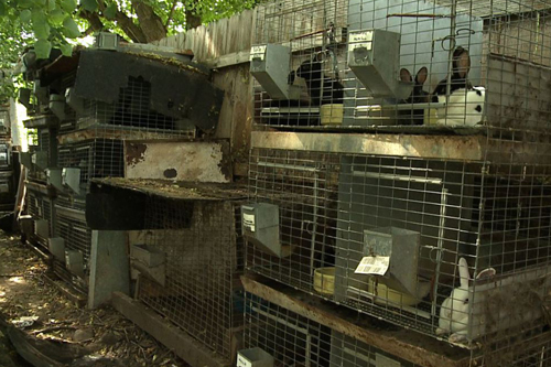 A rabbit breeding operation