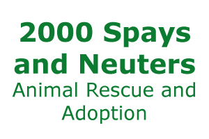 2000 Spays and Neuters Animal Rescue and Adoption