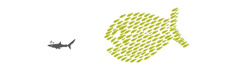 fish-together.jpg
