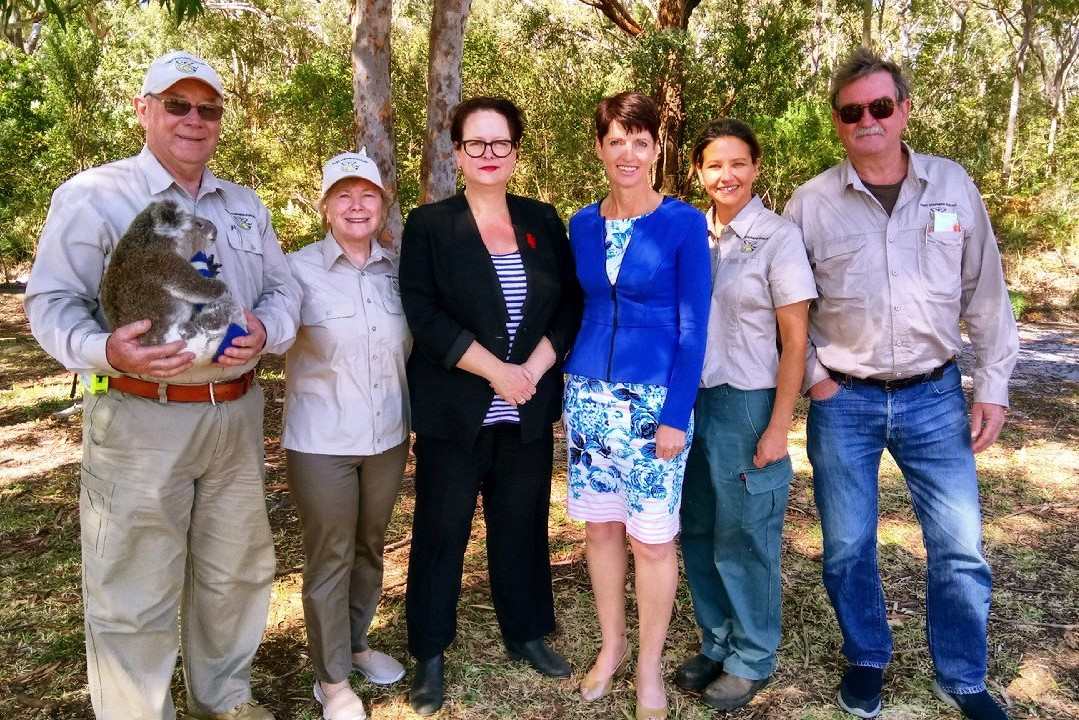 Port Stephens' koalas facing 'endangered' listing – Threatened Species Day highlights need for action