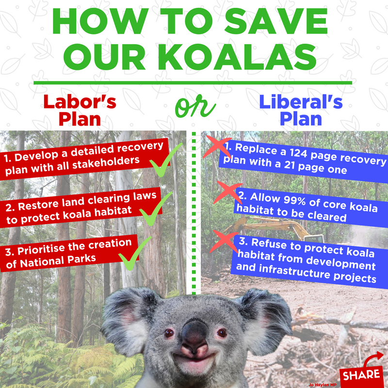 Berejiklian Government Koala Strategy a fig leaf for 7 years of inaction over koalas