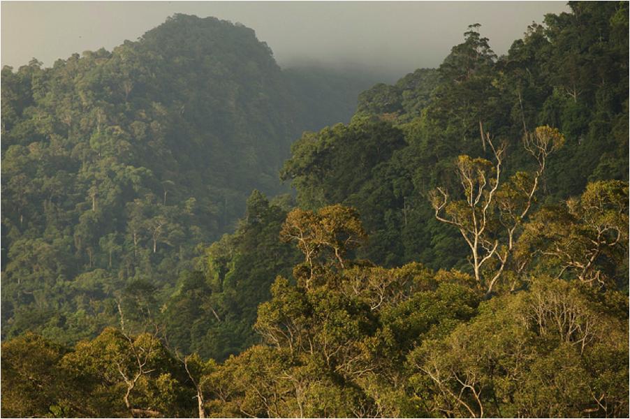 Indonesian rainforest. Image: Rainforest Action Network