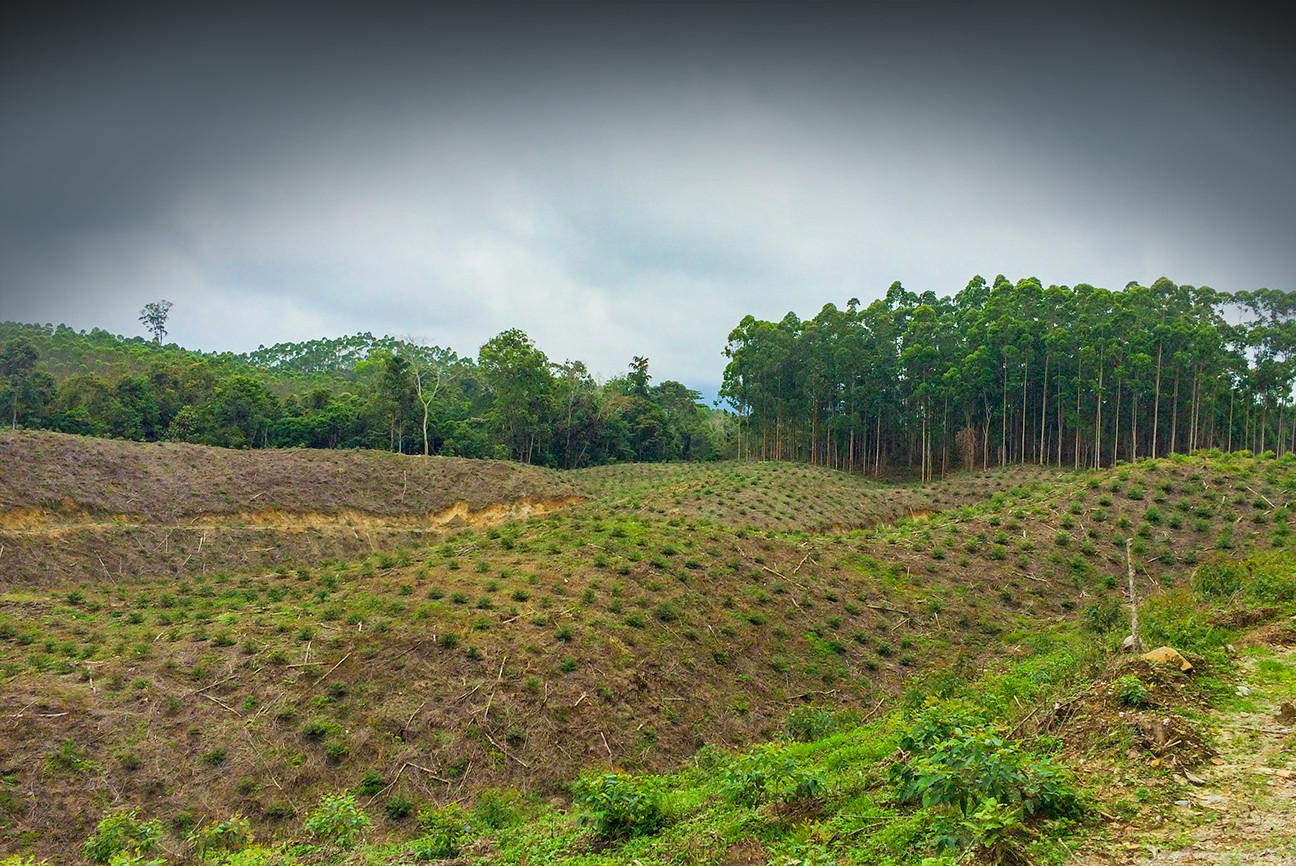 Tell Big Fashion: Stop Destorying Forests For Fashion