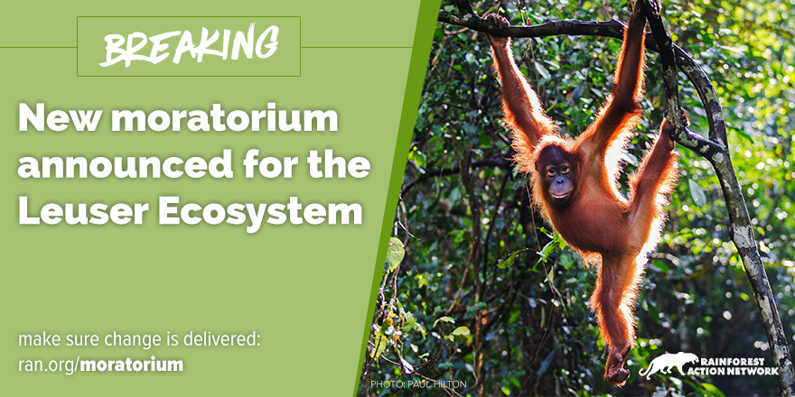 Support the new moratorium for the Leuser Ecosystem