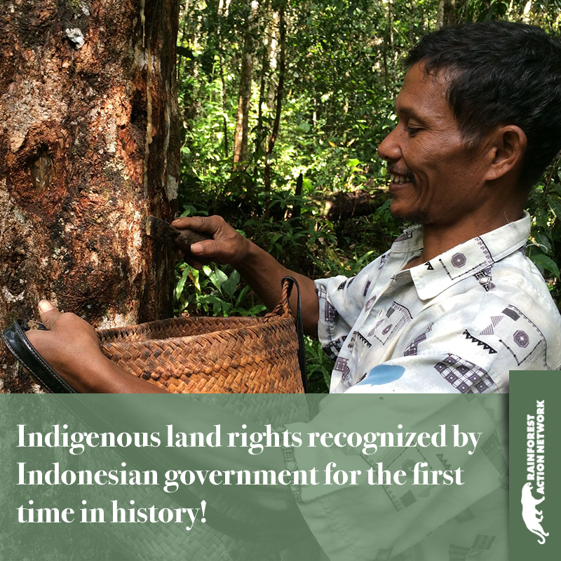 For First Time in History, Indonesian Government Recognizes Indigenous Customary Land Rights; Returns Contested Company Concessions to Local Communities