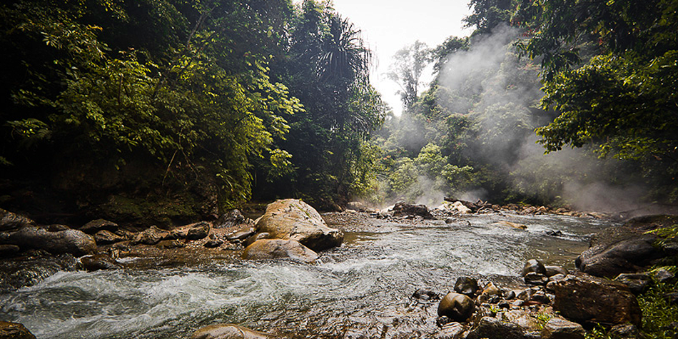 Take Action to Protect the Leuser Ecosystem