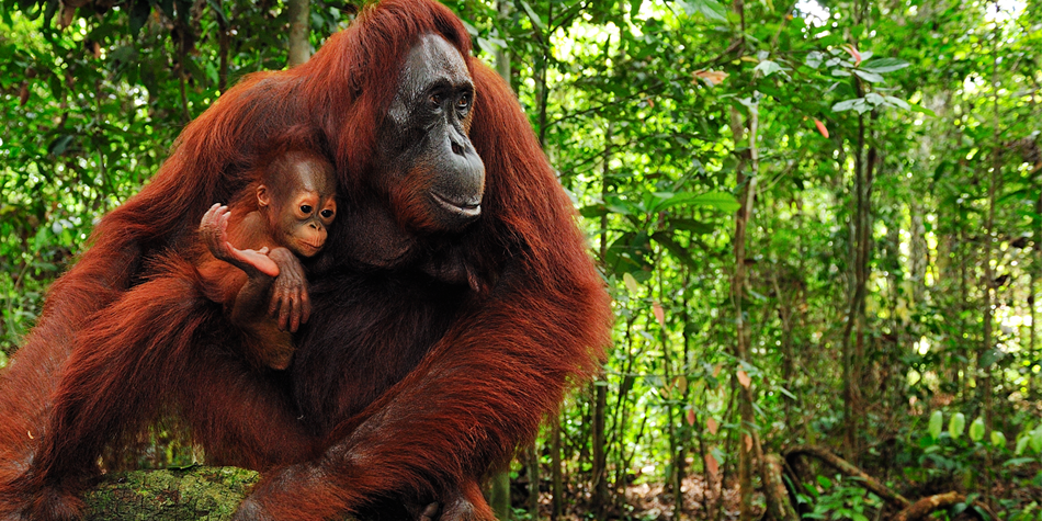 Tell Cargill to Eliminate Conflict Palm Oil
