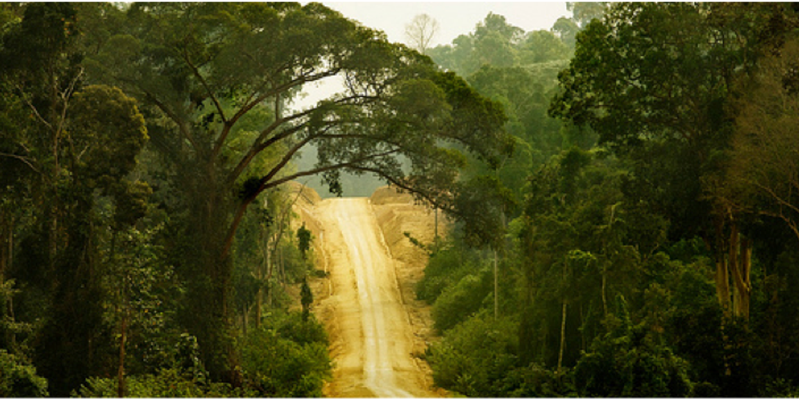 Indonesia's Rainforests