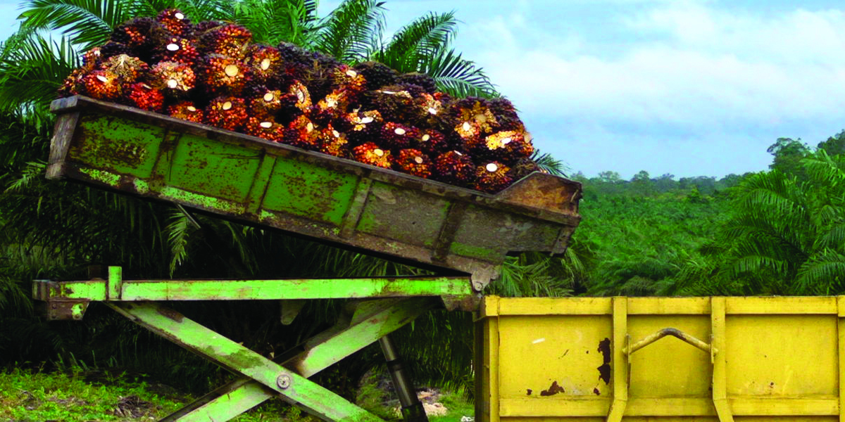 Palm Oil Fact Sheet