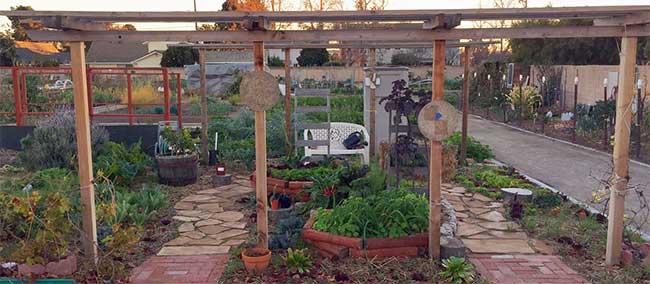 Garden_IMG_5912.jpg