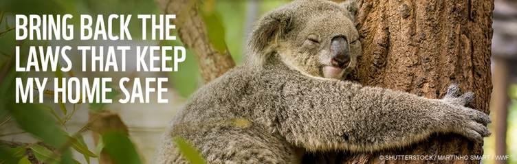 Koala Action
