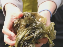 Photo for Living with the Land:  Seaweed Harvest