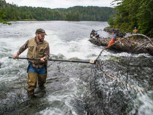 Sitka Conservation Audio Still: In Memory of Greg Killinger