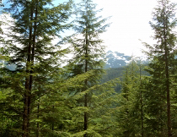 Sitka Conservation Video Still for: Video: A Walk with Natasha Paremski