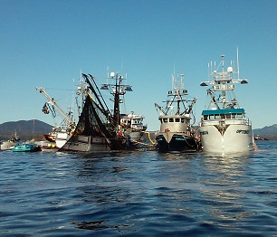 Herring Harvests: the Good, The Bad, and the (Not So) Ugly, Part 2 - Sitka Conservation Society