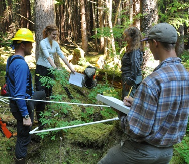 Photo for SCS-USFS study shows the potential of habitat restoration in logged forests