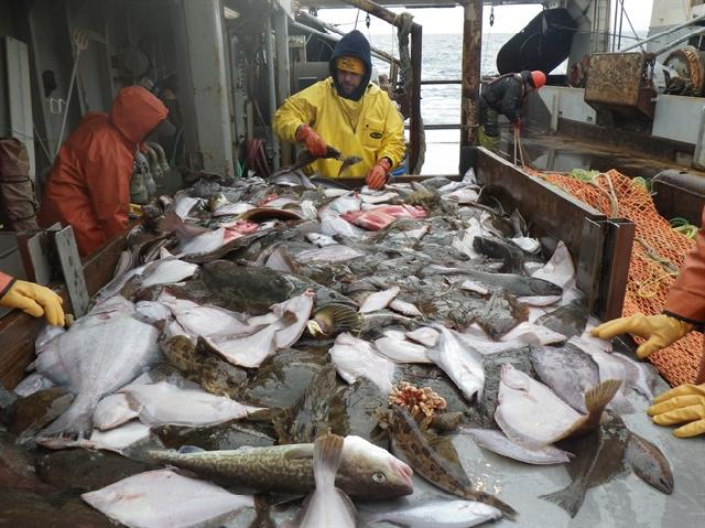 Photo for Stop Halibut Bycatch
