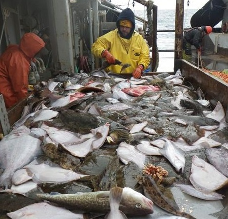 Stop Halibut Bycatch - Sitka Conservation Society