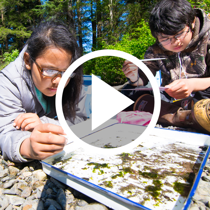 Photo for VIDEO: Sitka's Junior BioBlitz: Connecting Students with their Backyards