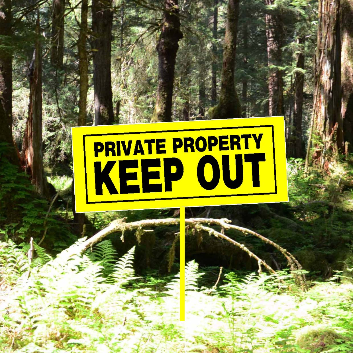 Private interests continue to threaten the Tongass National Forest - Sitka Conservation Society