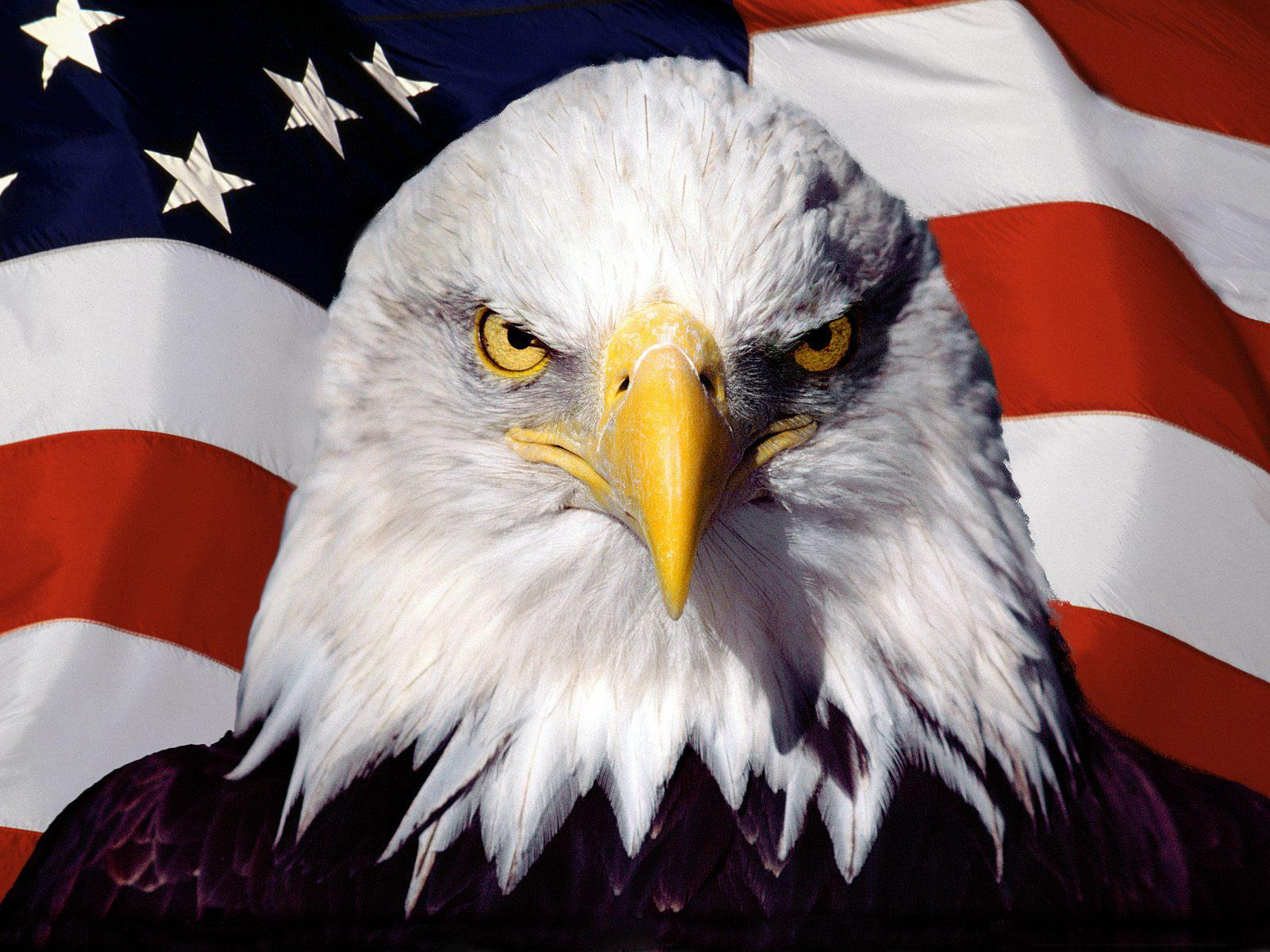 American_Eagle_and_US_Flag.jpg