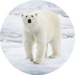 Tell Your Senators to Say NO to Arctic Drilling!