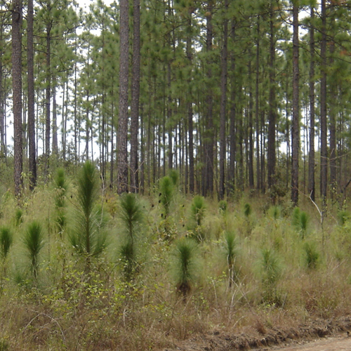 Photo of trees in various stages of growth