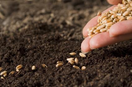 planting-seeds.jpg (425×282)