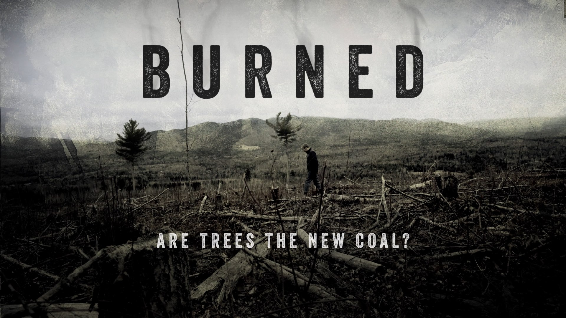 burned out trees with the words BURNED across it