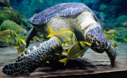 aquarios_newsletter.jpg