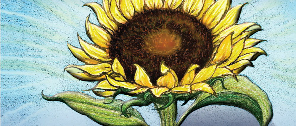 sunflower-banner.jpeg