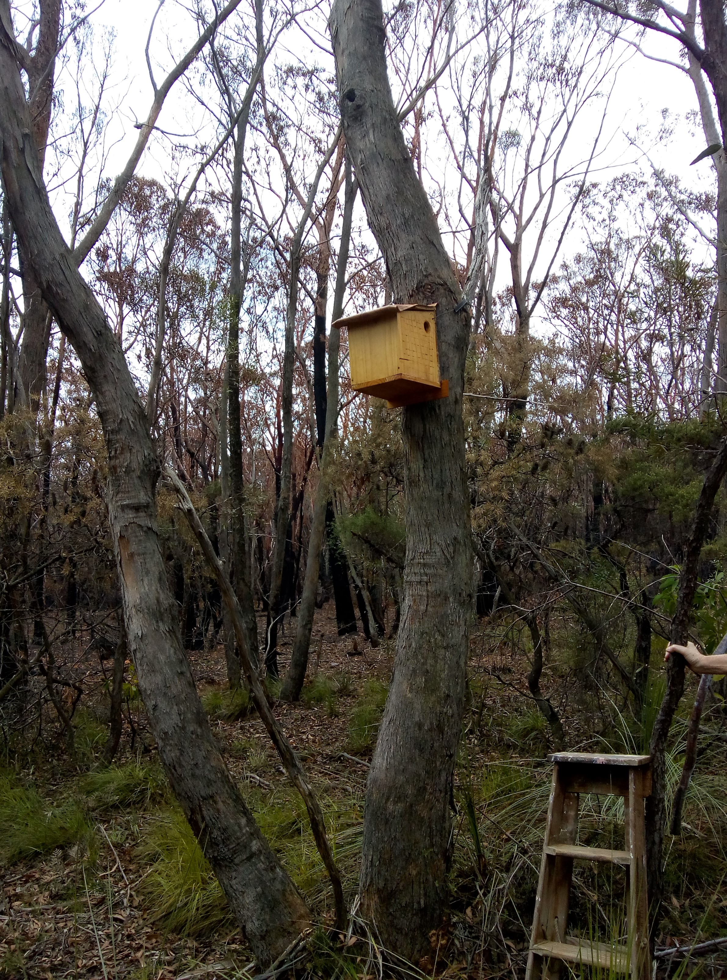 A nesting box in a tree