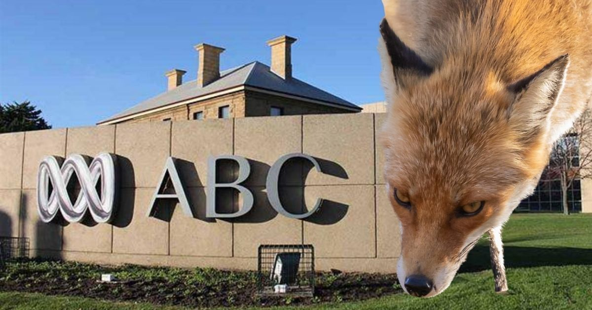 A fox drops his head in on the ABC
